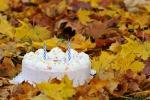 Поздравляем с днем рождения в октябре